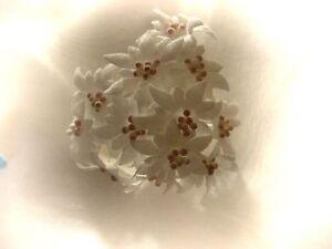 24 Edelweiss Kleinbluten Hochzeit Kommunion Tischdeko