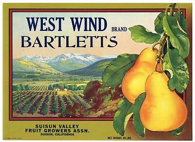 Crate Label Vintage Pear Suisun Californa Advertising West Wind Landscape Profit Small Advertising
