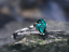 Pear-Shape-Emerald-engagement-ring-SET-14k-SOLID-White-gold thumbnail 5
