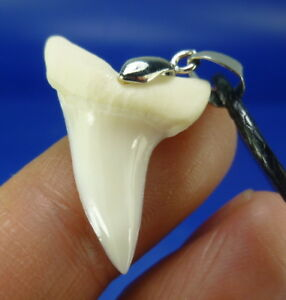 Great white mako shark tooth necklace shipping randomly ebay image is loading great white mako shark tooth necklace shipping randomly aloadofball Gallery