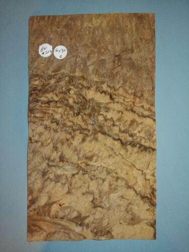 CONSECUTIVE SHEETS OF EUROPEAN BURR WALNUT VENEER 16 X 30 cm EU #204 MARQUETRY