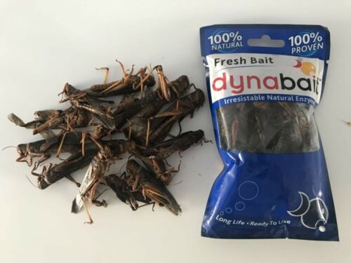 trout bait 6x snake food Dynabait locusts freshwater fishing tackle