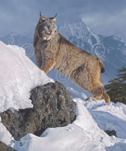 Lynx WILDLIFE ART PRINT Austere Ascent by Daniel Smith Cougar Cat Poster 24x20