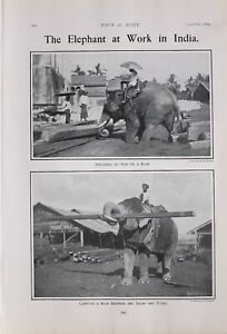1903 PRINT ELEPHANT AT WORK IN INDIA BEAM LIFTING BETWEEN TRUNK & TUSKS