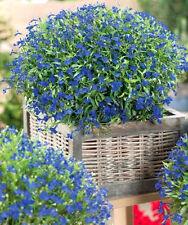 30000 Semillas de Lobelia / Lobelia Azul Púrpura / Lobelia Erinus