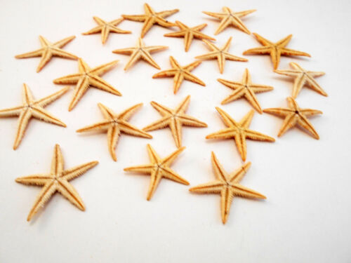 "1 1//2/"" Philippine Flat Beach Wedding Invitation Crafts Decor 25 Tan Starfish 1/"""