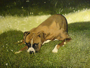 Boxer dog print Animal portraitdaisies grassBy Zoe Adams - <span itemprop='availableAtOrFrom'>Torquay, United Kingdom</span> - Boxer dog print Animal portraitdaisies grassBy Zoe Adams - Torquay, United Kingdom