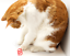thumbnail 5 - Twizlrz-Durable-Colour-Bouncing-Interactive-Pink-Orange-Blue-Cat-Toy-Toys