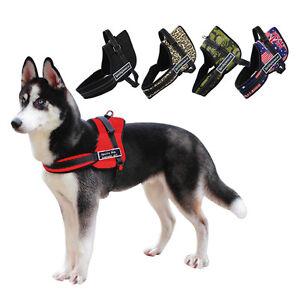 arnes para perros ecuador