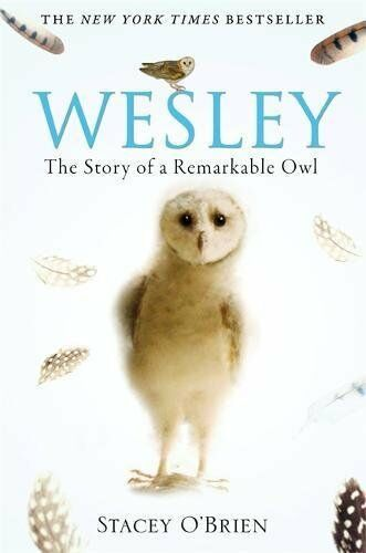1 of 1 - Wesley: The Story of a Remarkable Owl by O'Brien, Stacey 1849010587 The Cheap