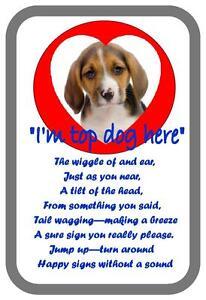 Beagle Beware of the Dog  Design Metal Door Sign