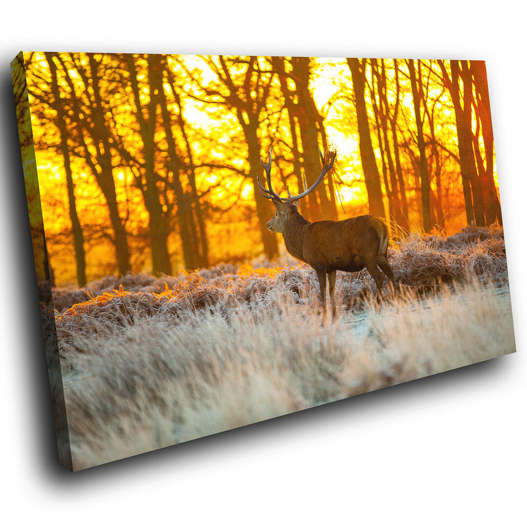 A554 Gelb Sunset Stag Forest Funky Animal Canvas Wall Art Large Picture Prints