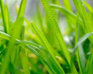 Fresh-Cut-Grass-Fragrance-Oil-Candle-Soap-Making-Supplies-FREE-SHIPPING