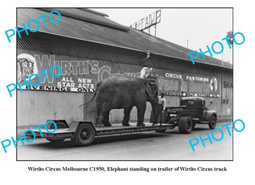OLD 6 x 4 PHOTO WIRTHS CIRCUS ELEPHANT c1950 MELBOURNE