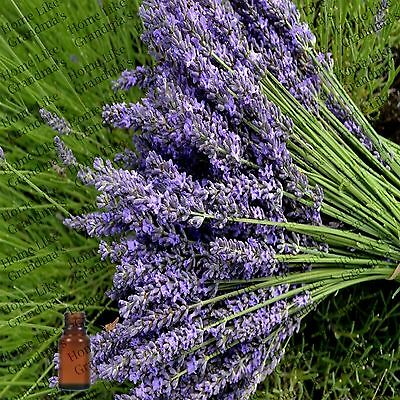 Lavender 40/42 Essential Oil - Free Shipping - US Seller!