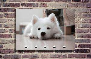 Hundegarderobe hund leinenhalter garderobe hundeleine for Garderobe individuell