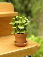 Miniature Dollhouse Fairy Garden Leafy Green House Plant In Pot