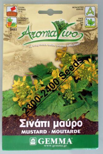 Mustard Herb Seeds 2300-2400 seeds Best Quality Very Fresh seeds.Mutarde