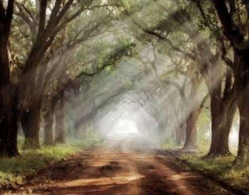Evergreen Plantation by Mike Jones Trees Pathway Print 14x11