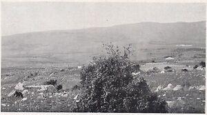 D2422-Foresta-Ficuzza-Godrano-Terreni-Stampa-d-039-epoca-1925-vintage-print