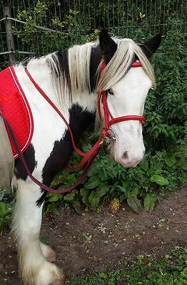 New Colour Bridles with Flash Noseband and Rubber Grip Reins Full Cob Pony