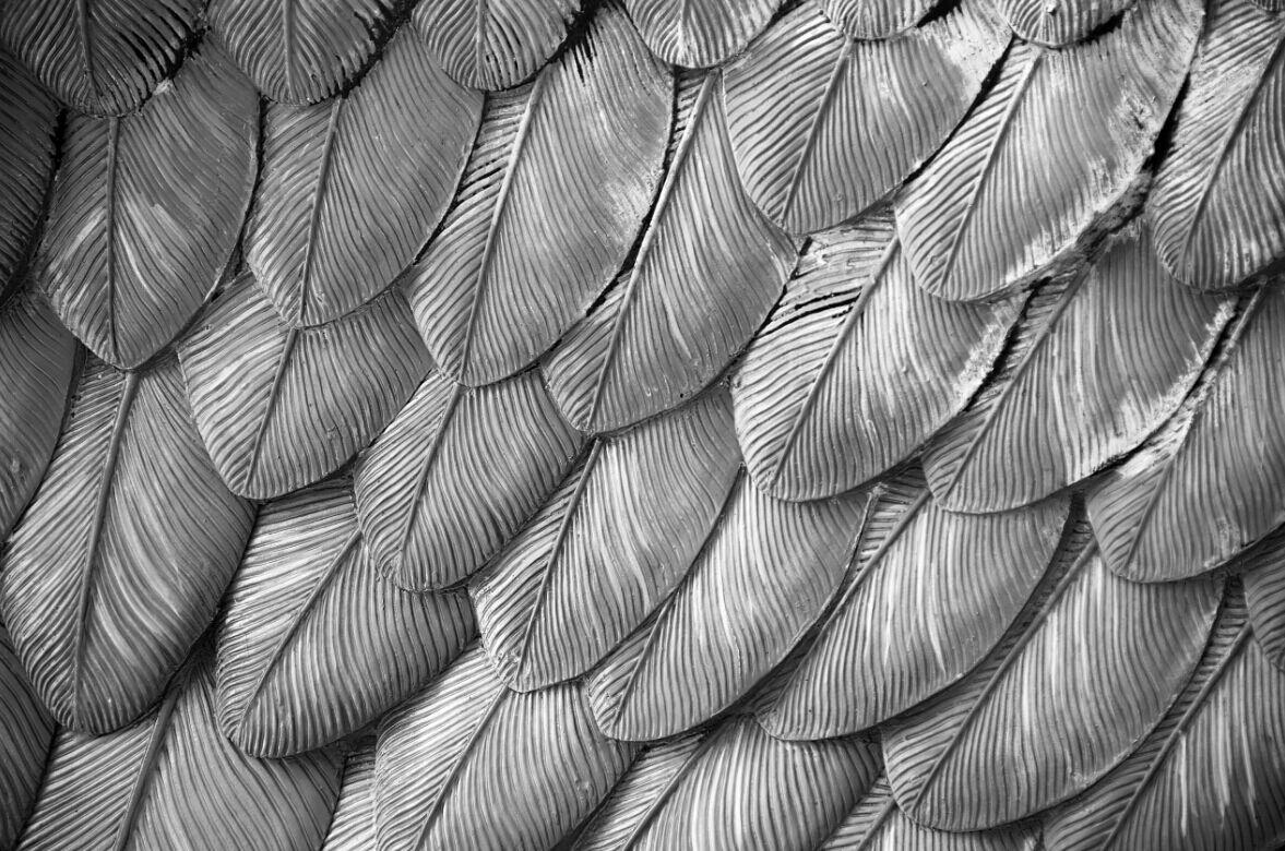 3D greye überlagerung federn Fototapeten Wandbild Fototapete BildTapete Familie