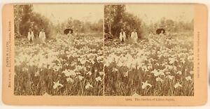 Giappone Giardino Con Giglio Foto Stereo PL55L6n Vintage Albumina