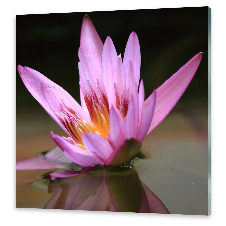 Vetro acrilico immagini Muro Muro Muro Immagine da plexiglas ® immagine stagno Lotus bc1ed2