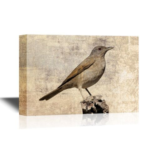 Bird Standing on a Small Rock-24x36 wall26 Birds and Poultry Canvas Wall Art