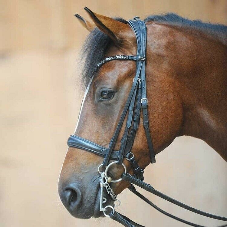 Kavalkade Weymouth-Bridle-combi - Cob Size   fashion