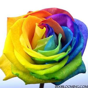Image Is Loading Fresh Cut Tinted Rainbow Roses Flower Delivery Bouquet