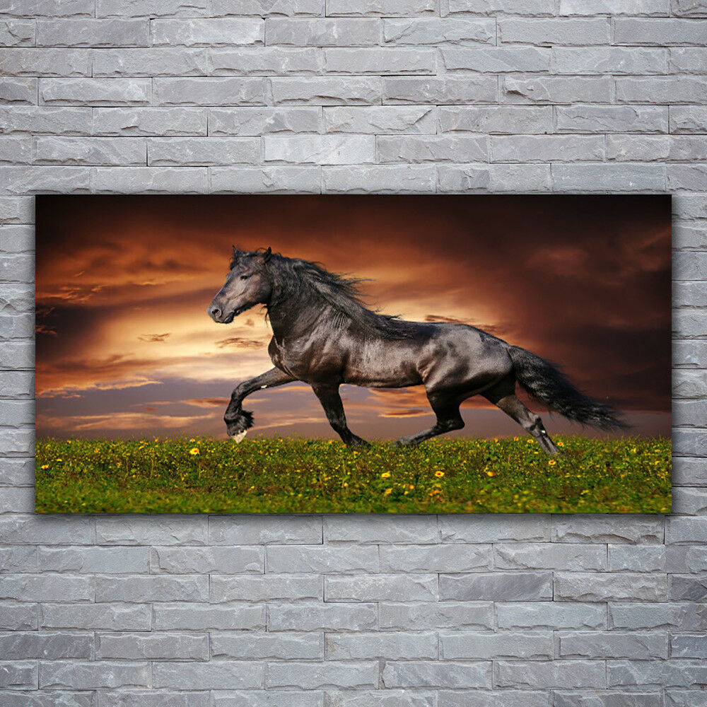 Verre Imprimer Wall Art Image 120x60 photo cheval noir Meadow Animaux