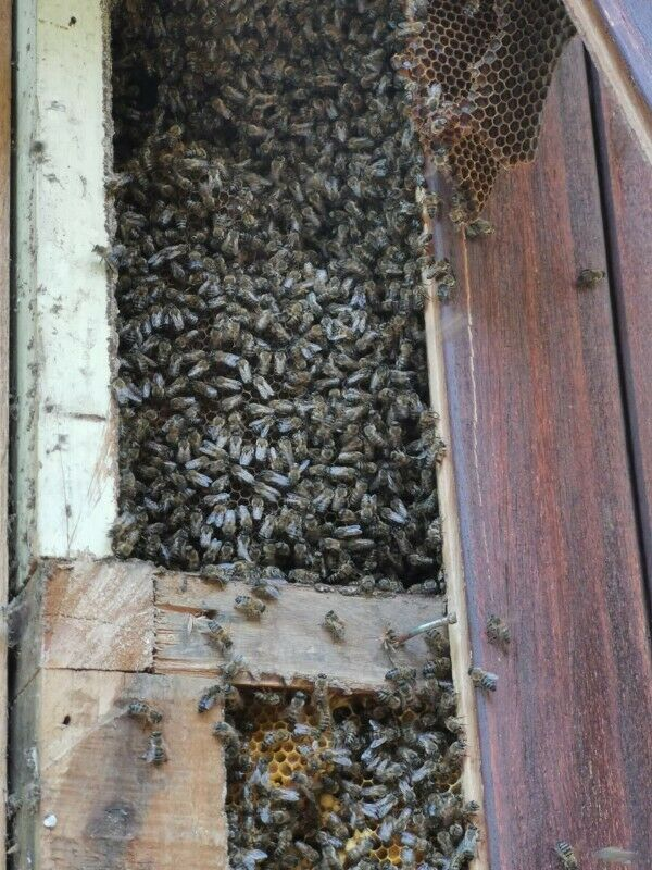 Professional BEE removals