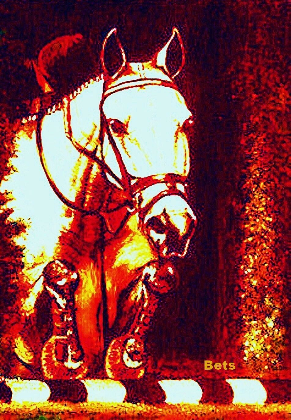 HORSE PRINT Giclee JUMPER Art NO FAULTS artist BETS  5 COLORS print size 14 X 19