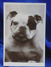 Antique photo postcard Little Witch! Old English Bulldog Bully Patch eye dog