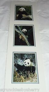 Giant-Panda-Bear-Prints-Mark-J-Thomas-Ready-Framing-Published-Photographer