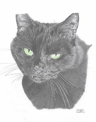 BLACK CAT green eyes Limited Edition art drawing print signed by UK artist