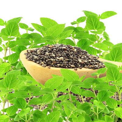 La Salvia Spagnolo è Il Fornitore Per I Preziosi Chia-semi.-mostra Il Titolo Originale