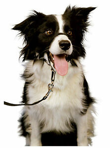 talla 5 Company of Animals Halti Headcollar para perros-negro