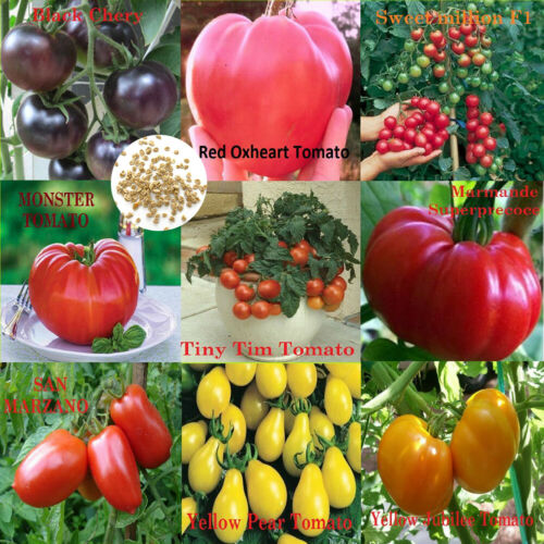 500x Mixed 9-Varieties Tomato Seeds Garden Vegetable Fruit Yard Balcony Plant Mg