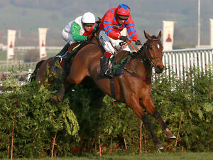 International horse racing betting system where to instantly buy bitcoins