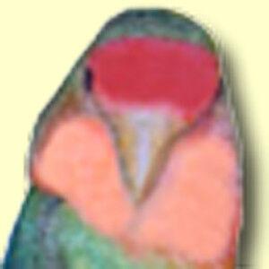 Lovebird Collectibles