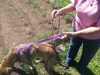 Dog Leash With 2 Handles For Better Control 1 By 6' Choice Of Colors