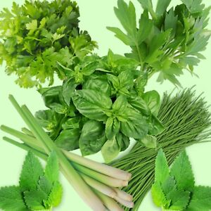 herb-seeds-mint-parsley-chive-lemon-grass-coriander-basil-870-seeds-1pack-of-ech
