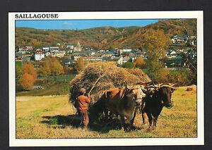 SAILLAGOUSE-66-VILLAS-amp-STADE-AGRICULTEUR-avec-ATTELAGE-BOVINS-aux-FOINS