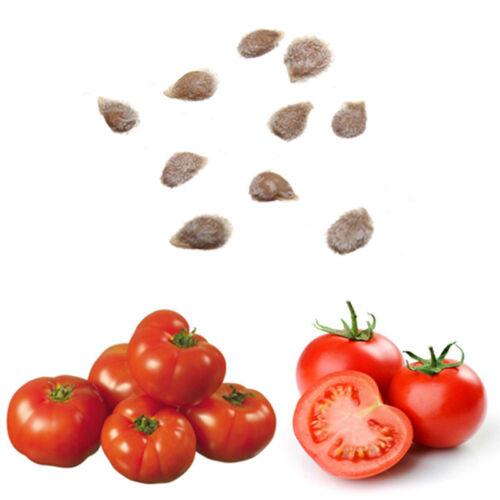 10pcs Seeds Süße Riesige Baumtomate Fruchtgemüsesamen Pro oorr