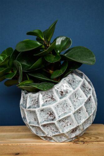 Ivyline ELBA leaning diagonale Planteur Pot De Fleur En Vert Mentherustique 16 cm
