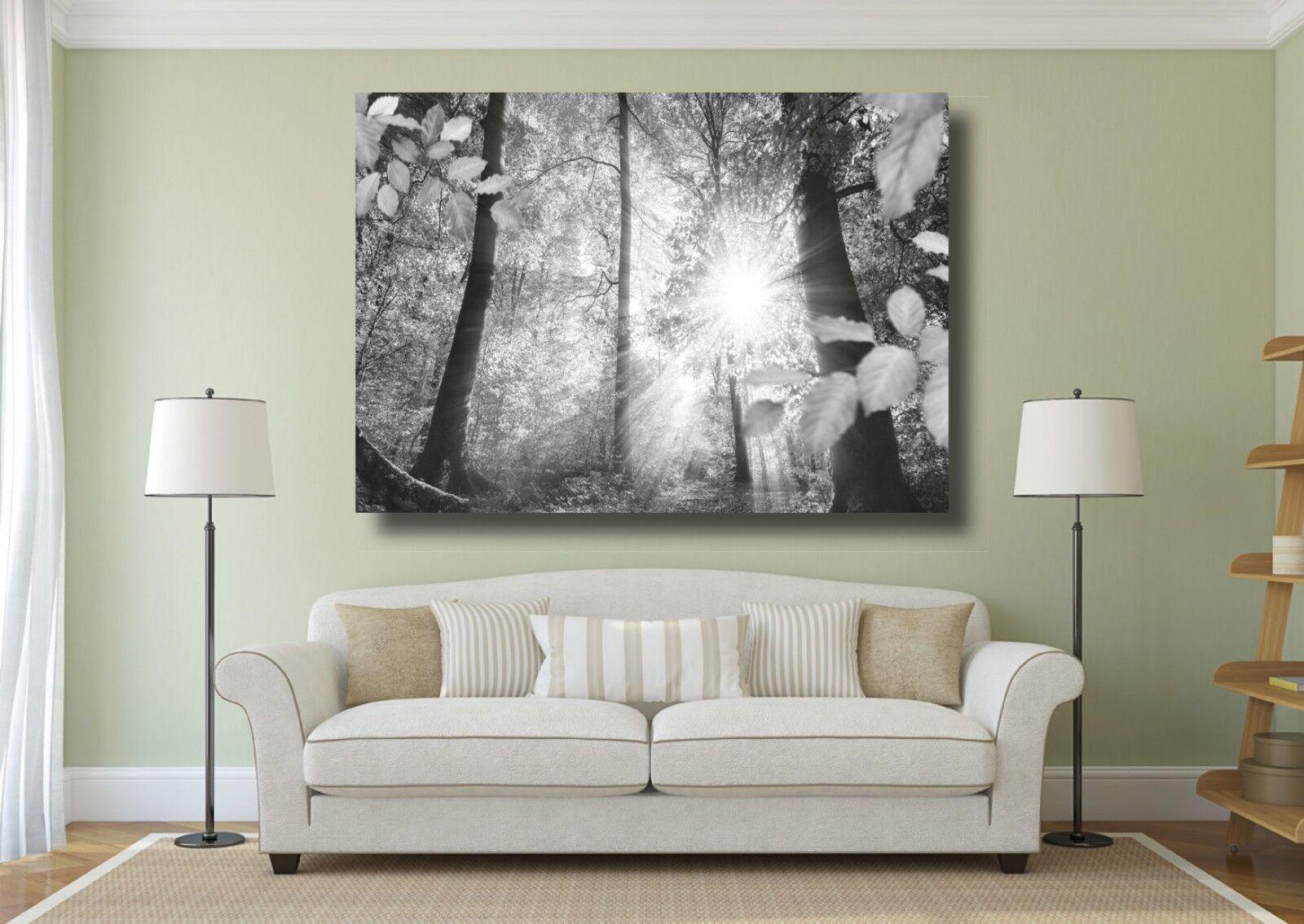 Beautiful Tree Forrest landscape Large Box CANVAS PRINT  - A0 A1 A2 A3 A4 Größes