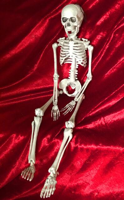 Skelett Halloween / Lehrmodell Anatomie / Bewegliches Menschliches Skelett 50cm