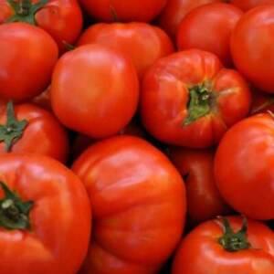 Beefsteak Tomato Seeds 100 Ct Vegetable Garden HEIRLOOM NON-GMO FREE SHIPPING